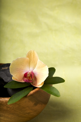 mary-st-pierre-blog4-orchid