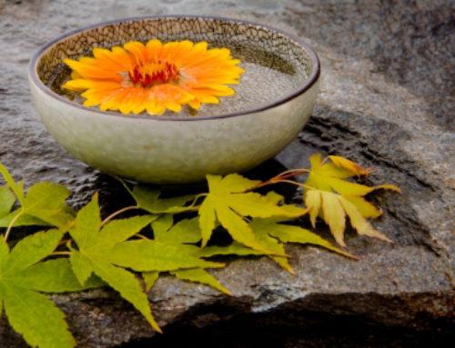 Women's Meditation Tuesday Evenings